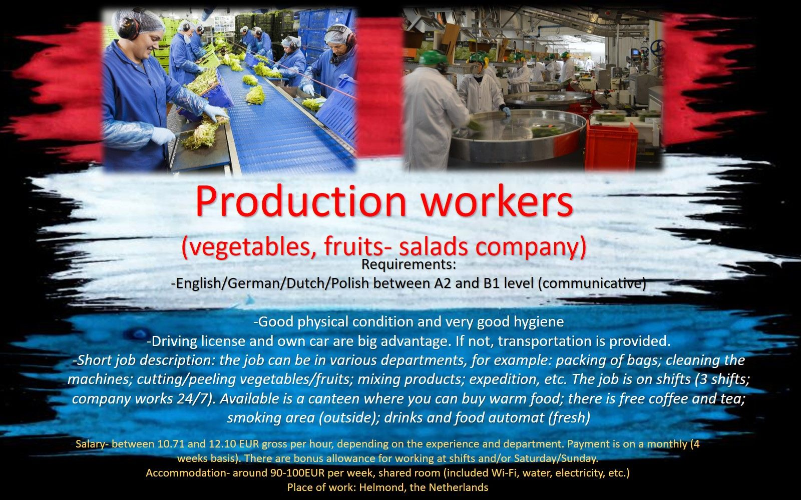 Production workers, factory job, simple work, warehouse, fruit, vegetables, salads. Hessing, Helmond. Holland, Netherlands